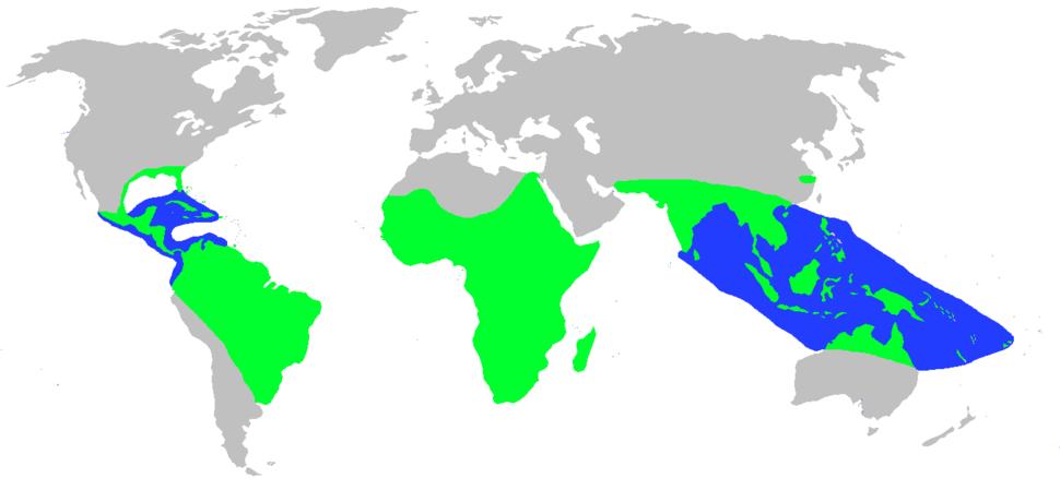 World.distribution.crocodilia.1