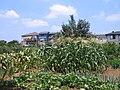 Yakushidai 1chome vegetable field.jpg