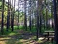 Yemelyanovsky District, Krasnoyarsk Krai, Russia - panoramio (21).jpg