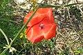 Zakynthos flora (35064172663).jpg