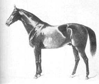 Celle State Stud - Zernebog (1845–1871) was a foundation stallion for the Hanoverian breed, and his descendants in the male line make up the F and W families. He was born in Mecklenburg and was purchased by Celle.