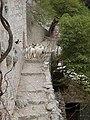 Ziegen eremitage blaca brac kroatien.JPG