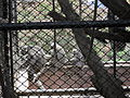 Zoo Kathmandu Nepal (5085864315).jpg