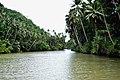 """""""A Jungle-like River Cruise"""".jpg"""