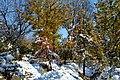 (((مناظر زمستانی باغات مراغه ))) - panoramio (2).jpg