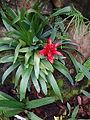 (Jardín Botánico de Quito) pic b4.JPG