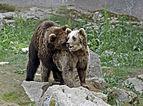 Ähtärin karhut 24.jpg