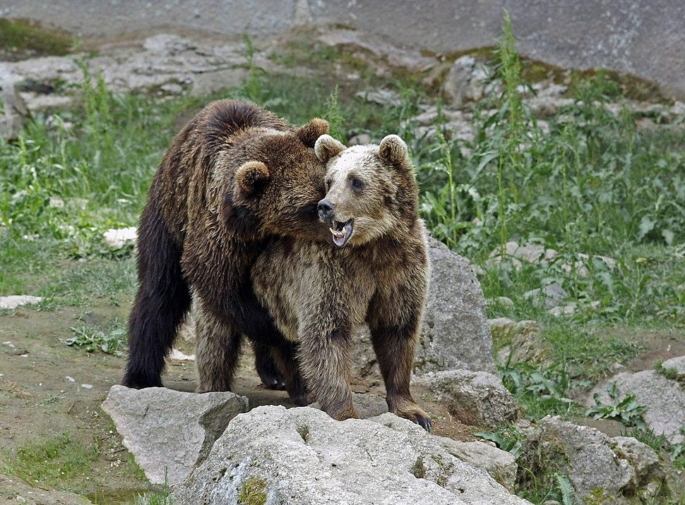 Ähtärin karhut 24