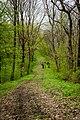 Бутова гора, Шишацький район - 2016-04-17 025.jpg