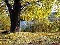 Городской сад в Кременчуге (5).jpg