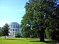 Дуб, посаженный Петром I, на фоне Елагина дворца..jpg