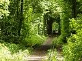 Клеванський парк, Рівненський район 205.JPG