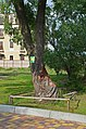 Козацька верба, на заплаві 40 м від початку вул. Димитрова.jpg