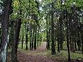 Лесная тропинка. Фото Виктора Белоусова. - panoramio.jpg