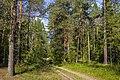 Лесные дорожки MG 9491.jpg
