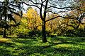 Осень парк Победы Мукачево 2.jpg
