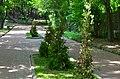 Парк Берёзовая роща в Киеве. Фото 12.jpg