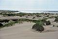 Песчаные дюны у устья Варзуги вид на факторию.jpg
