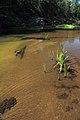Река Илеть 16.jpg