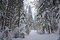 Реликтовый лес долины реки Смородинки, ближе к Орехово.jpg
