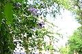Сад Аквариум в Москве. Фото 16.jpg