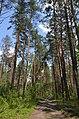 Сосново-дубові насадження, Пісківка 01.jpg