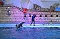 Трускавець, дельфінарій Оскар 02.jpg