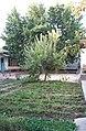 Узбекский дворик возле дома (Ташкент).jpg