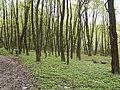 Украина, Киев - Голосеевский лес 12.jpg