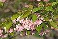Цветущая сакура в парке Киото - Cherry blossoms in Kyoto park (26146846634).jpg