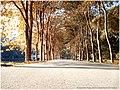 华南植物园 - panoramio - 蒋鹏飞 (6).jpg