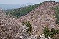 吉野山下千本 2014.4.09 - panoramio.jpg