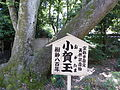 小賀玉の木(おがたまのき).JPG