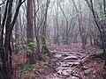 屋久島 - panoramio (1).jpg