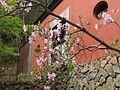 山寺桃花 - Peach Blossom in Front of a Temple - 2010.04 - panoramio.jpg