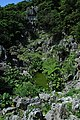 金剛林山 - panoramio.jpg