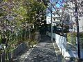 馬絹 脇道と桜 - panoramio.jpg