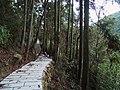 鼓岭4号游步道 - No.4 Walkway of Guling Mountain - 2015.01 - panoramio.jpg