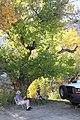 021 - Cottonwood Road campsite (10-15-11) -01 (6272892979).jpg