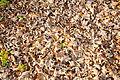 11-11-06-herbsttexturen-by-RalfR-13.jpg