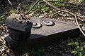 1408viki Cmentarz żydowski przy ul. Lotniczej. Foto Barbara Maliszewska.jpg