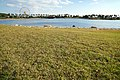 141115 Hyogo prefectural Ako Seaside Park Japan16bs5.jpg