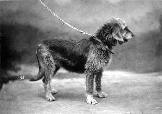 Otterhound - Otterhound 1879
