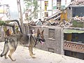 2008년 중앙119구조단 중국 쓰촨성 대지진 국제 출동(四川省 大地震, 사천성 대지진) SSL26842.JPG