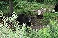 2008-08-12 Moncton Trip (2758025049).jpg