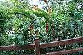 2010 07 17220 5828 Beinan Township, Taiwan, Jhihben National Forest Recreation Area, Plants.JPG
