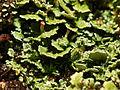 2012-11-18 16-24-51-lichen.jpg