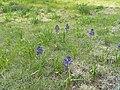 2015.05.05 18.22.44 DSCN2330 - Flickr - andrey zharkikh.jpg