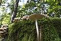 20150929 009 Heythuysen Wandeling Leudal (21642095178).jpg