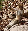 2016-04-21 15-04-11 montagne-des-singes.jpg